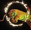 Цирки в Волжском